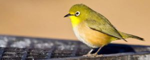 Image of a green bird